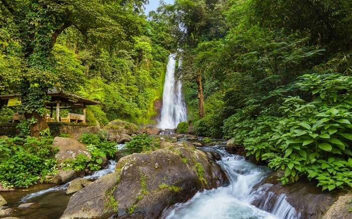 a gorgeous waterfall amid jungl