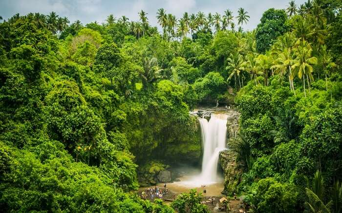 a gorgeous waterfall in the middle of a jungle