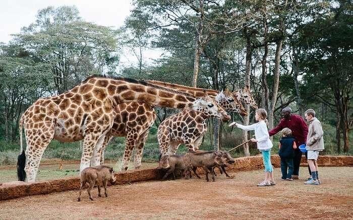 acj-3005-giraaffe-manor-kenya (11)