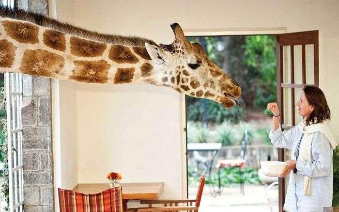 acj-3005-giraaffe-manor-kenya (5)