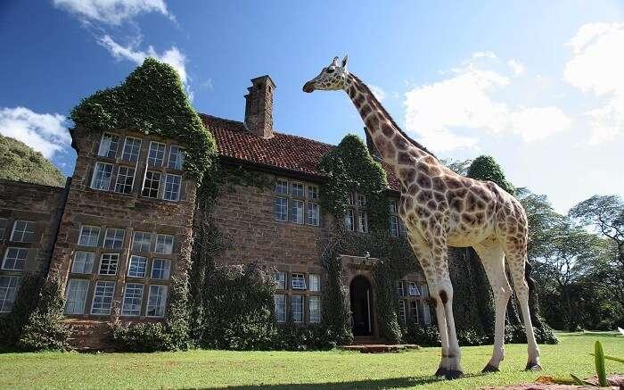 acj-3005-giraaffe-manor-kenya (6)