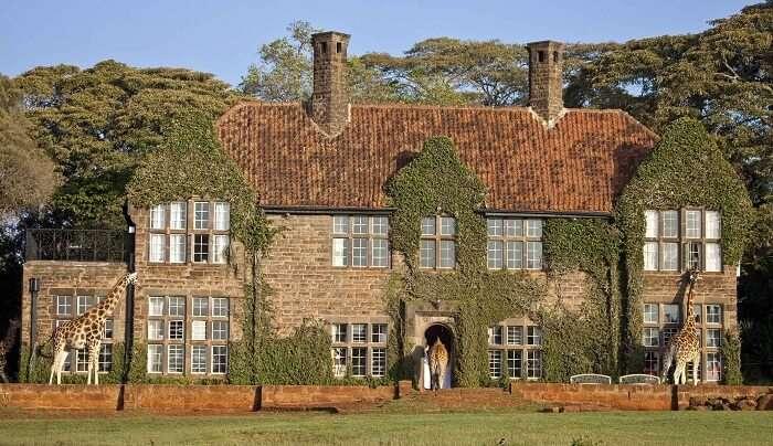 acj-3005-giraaffe-manor-kenya (9)