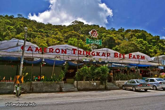 Bee farm in Cameron Highland