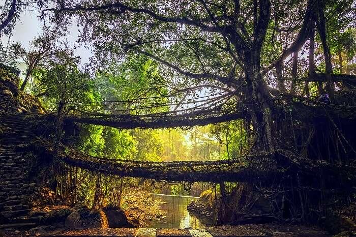 cherrapunji places to visit double decker root bridge