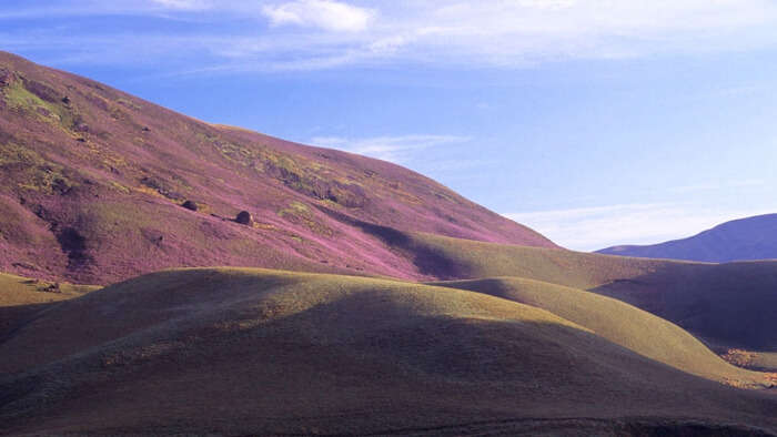 Neelakurinji sprinkled over the mountains