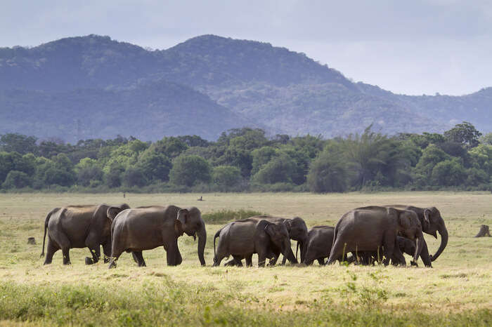 paradise for elephants