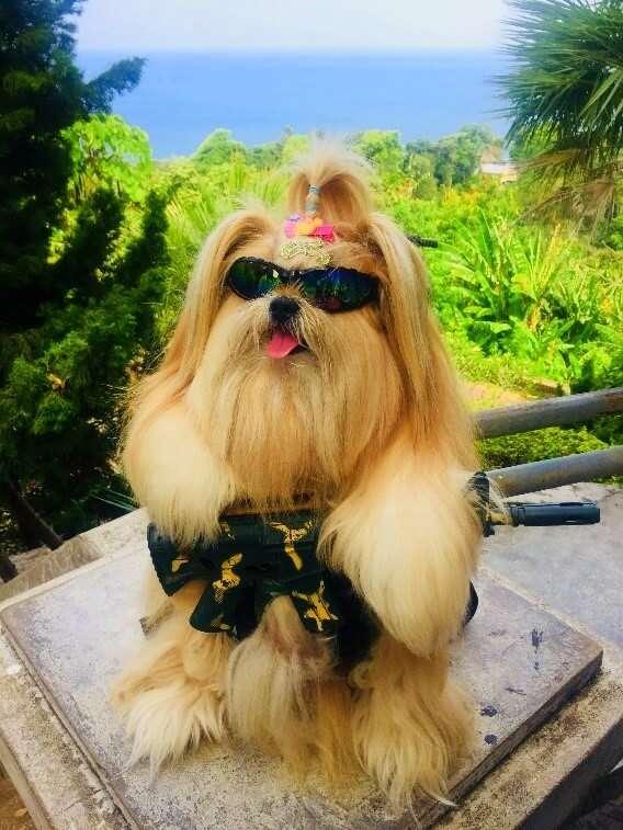pooja thailand trip dog