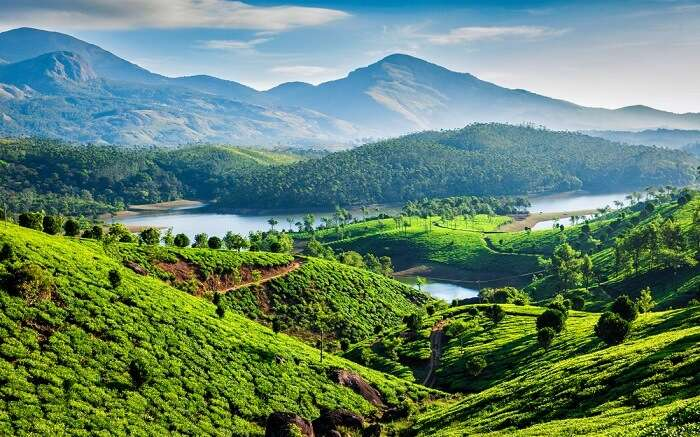 the lush green munnar valley