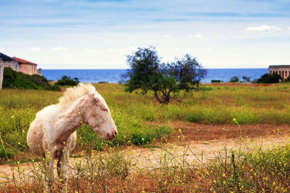 Asinara National Park