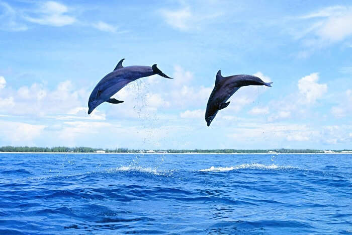 Gaze at dolphins in the Sado estuary portugal