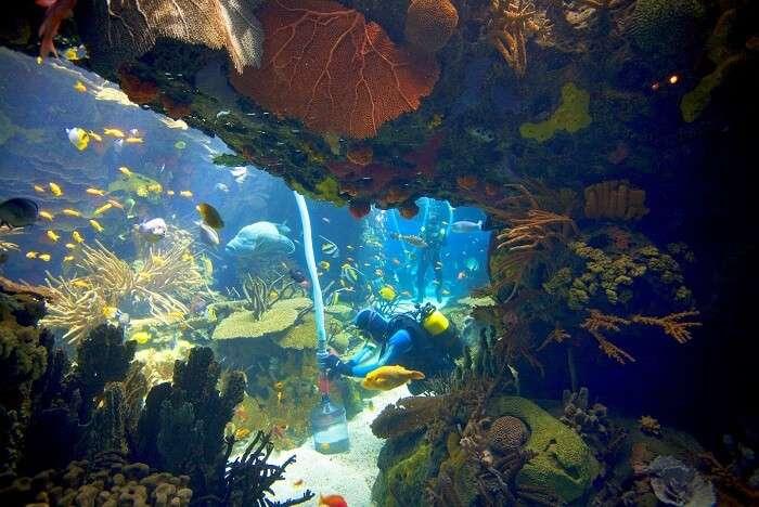 Meet colourful sea creatures at the Oceanário de Lisboa portugal
