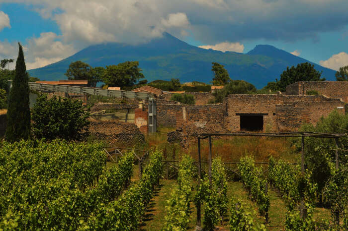 A vineyard in Naples, Italy