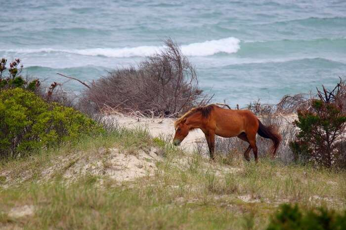 Shackleford Banks north carolina