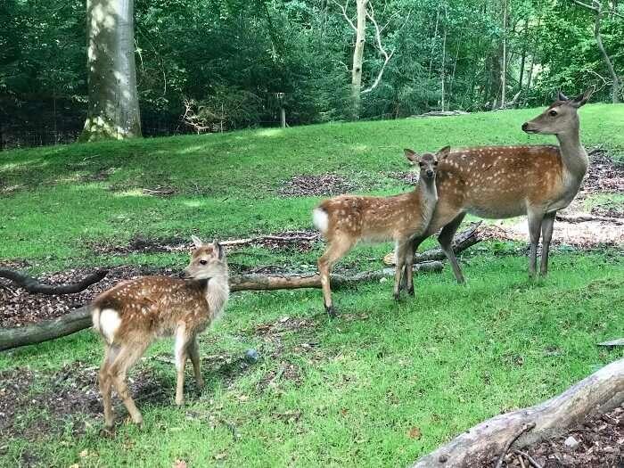 deer park almora