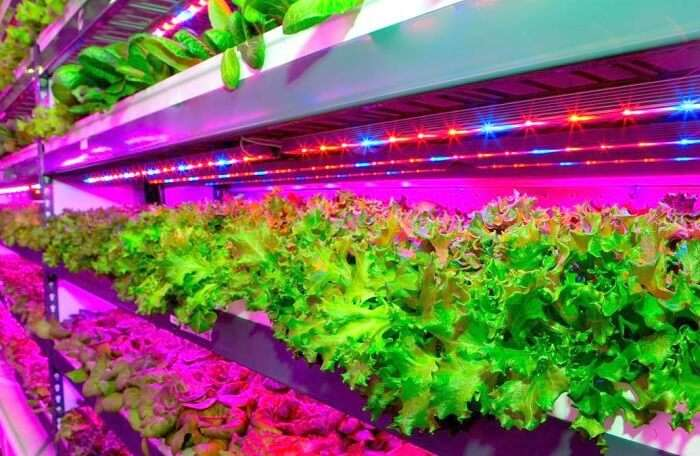 Vertical Farm in Dubai