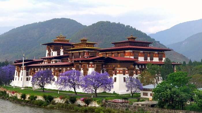 rohit bhutan family trip travelogue monastery purple trees