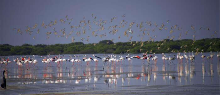 60 species of birds