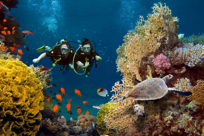 Divers enjoying the view of coral formations and marine life