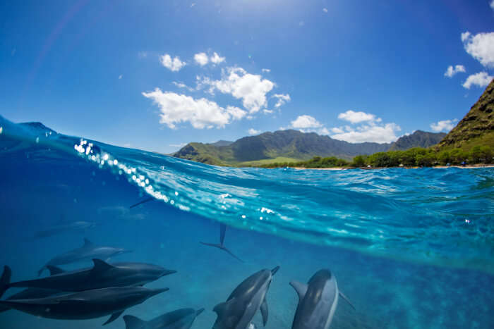 Dolphins under water at Baie Ternay Marine National Park, Seychelles