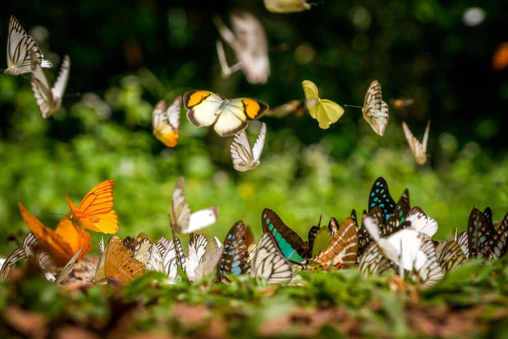 ideal places to spot numerous butterflies