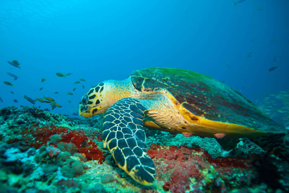 best dive sites in Sri Lanka!