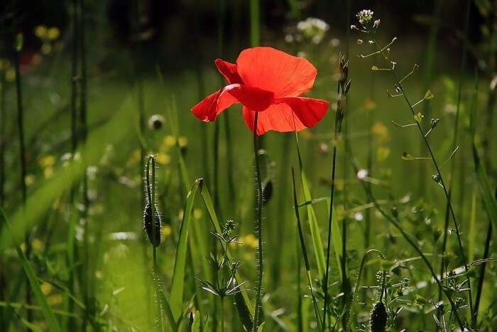 Capture the beautiful flora