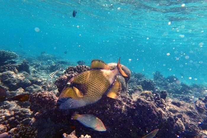 Dive Water Snorkel Fish Sea