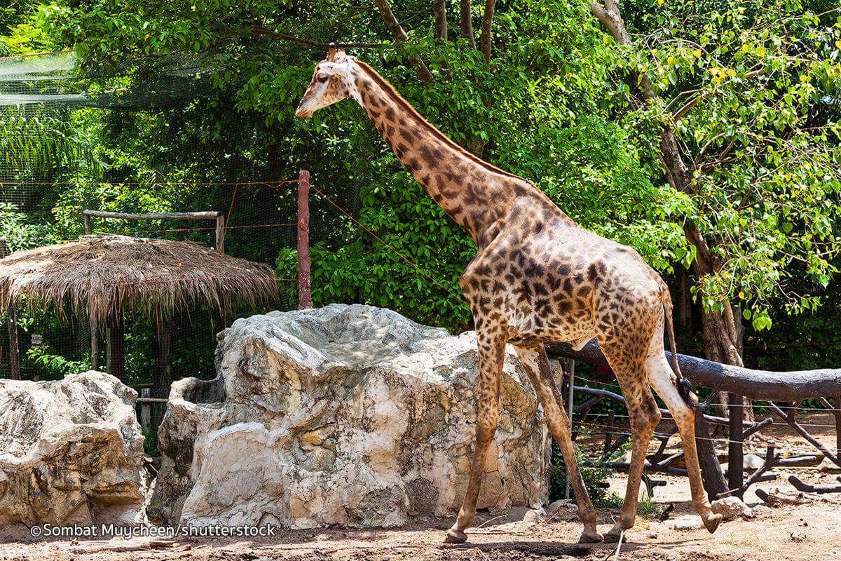 Exquisite and rare animals