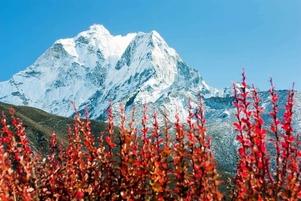 Flora of the himalayas