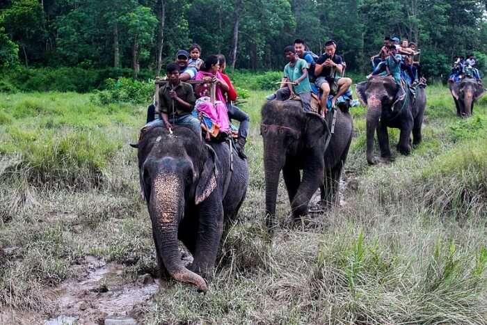 Go for an elephant safari