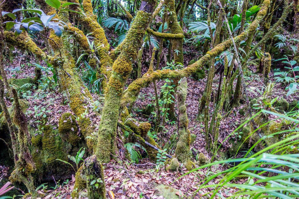 moss covered trees in Morne Seychellois National Park