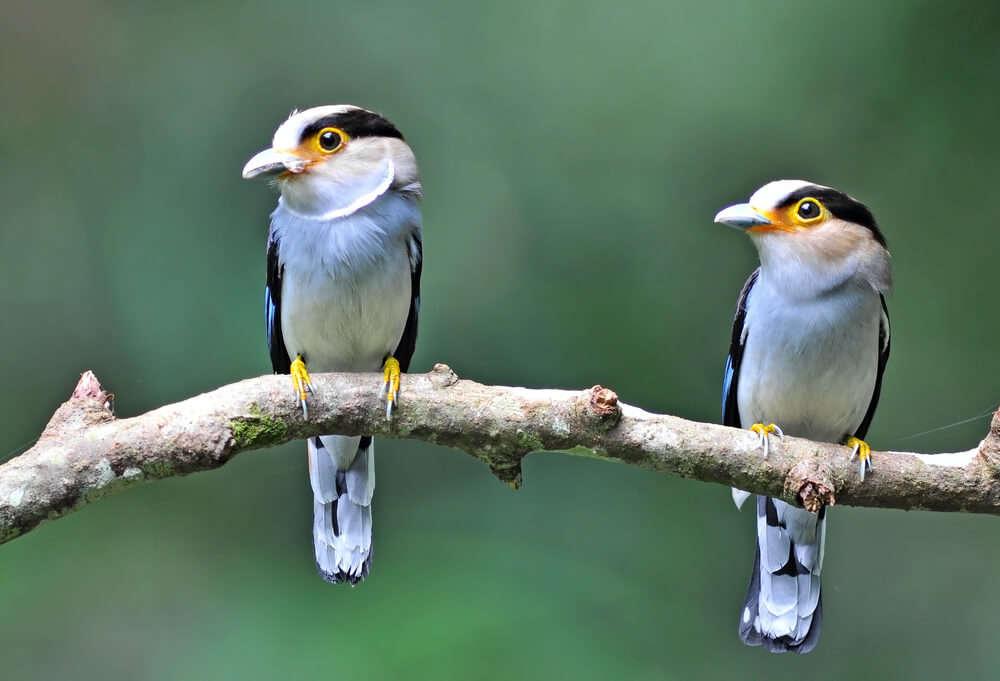area overwhelms every bird lover