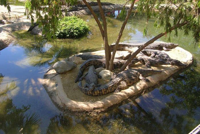La Vanille Crocodile Park Mauritius