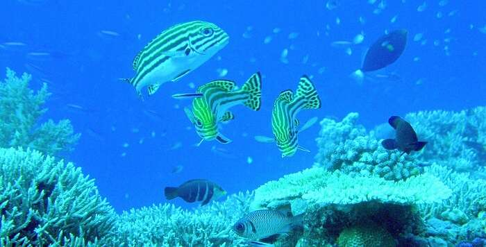 Under water marine life Layang Layang Island