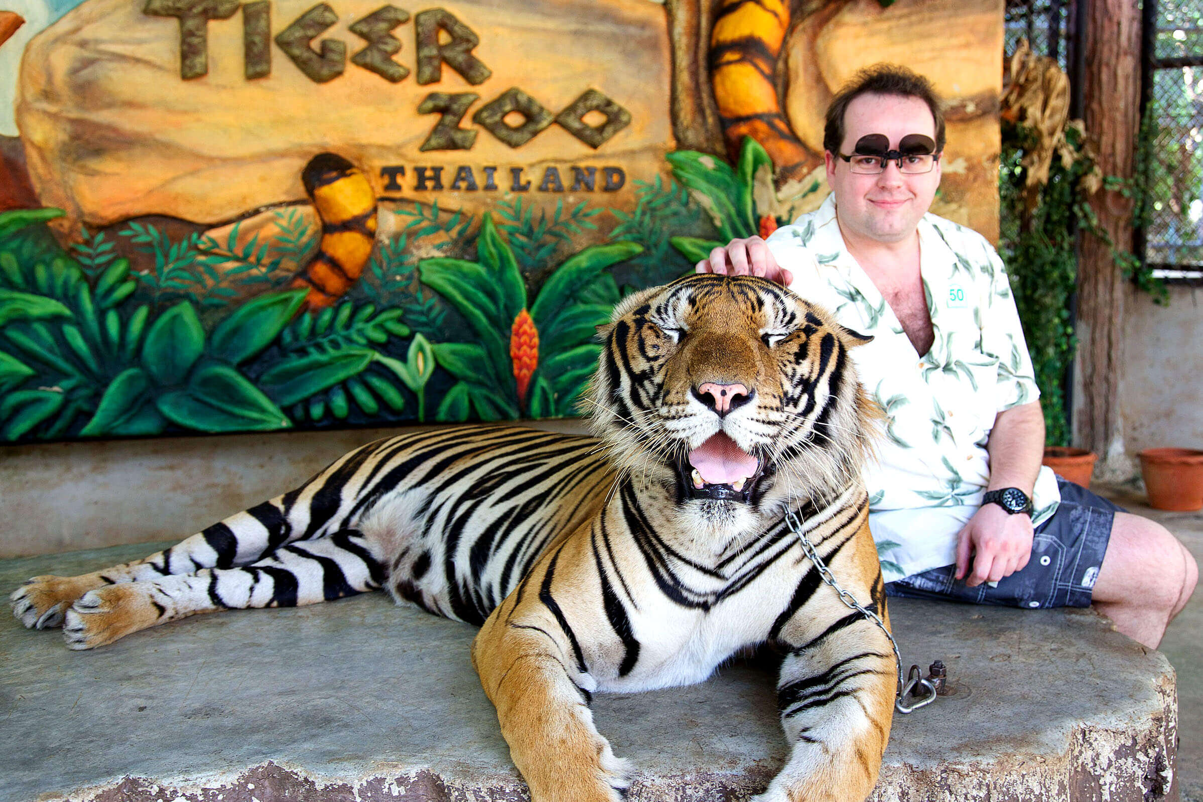 Tourists can see the tiger