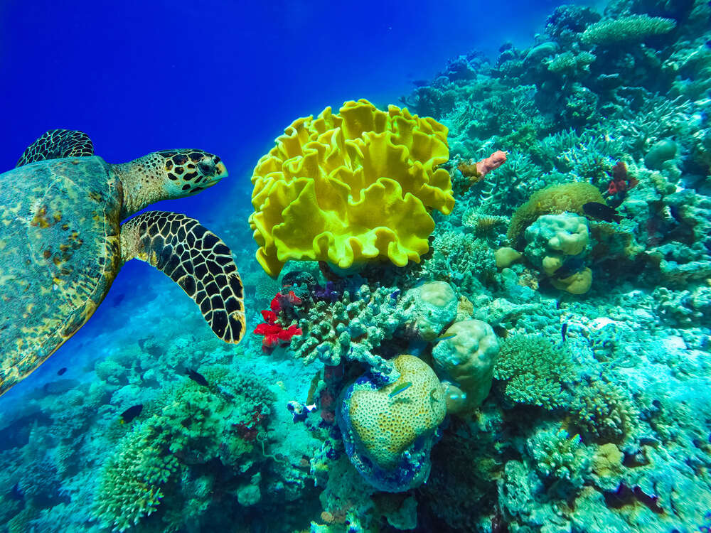 Trou Aux Biches snorkeling