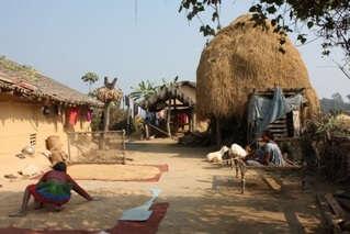 Visit the Chitwan Tharu Villageb