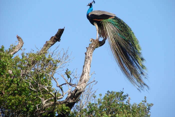 Wasgamuwa National Park in Sri Lanka