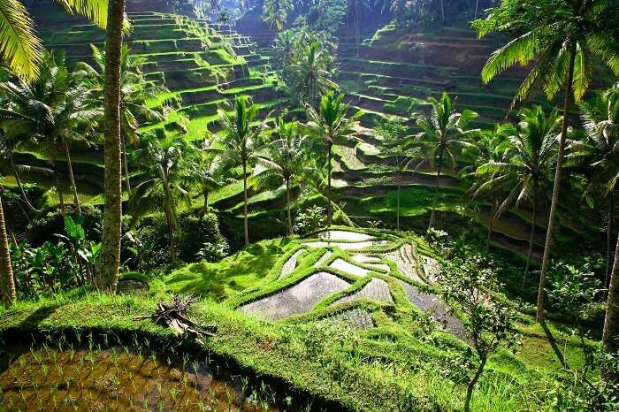 enjoy ancient temples, large rice fields
