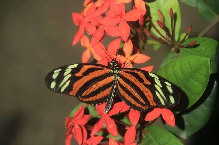 butterfly in park