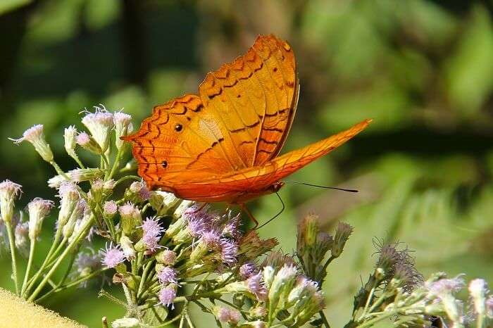 Butterfly parks