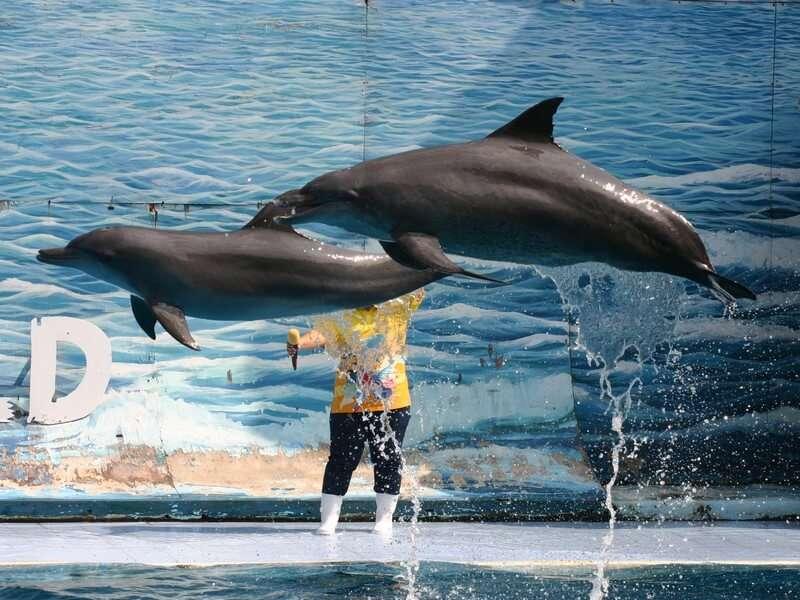 Dolphin show in Safari world bangkok