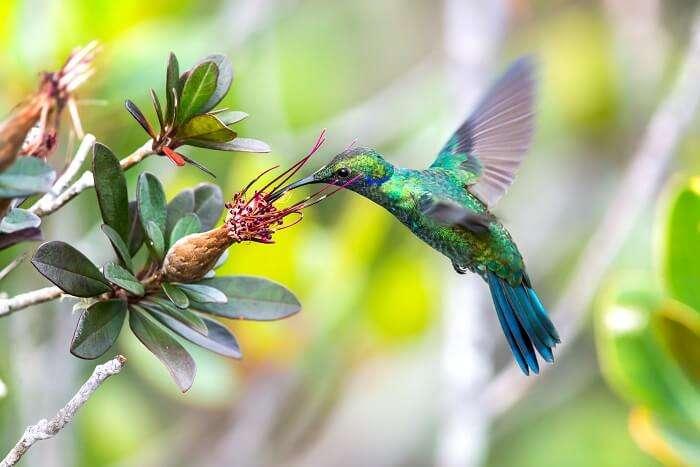 wildlife canaima