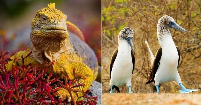 galapagos islands Wildlife tours3