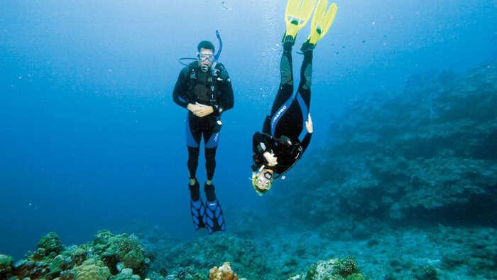most vibrant aquatic fauna