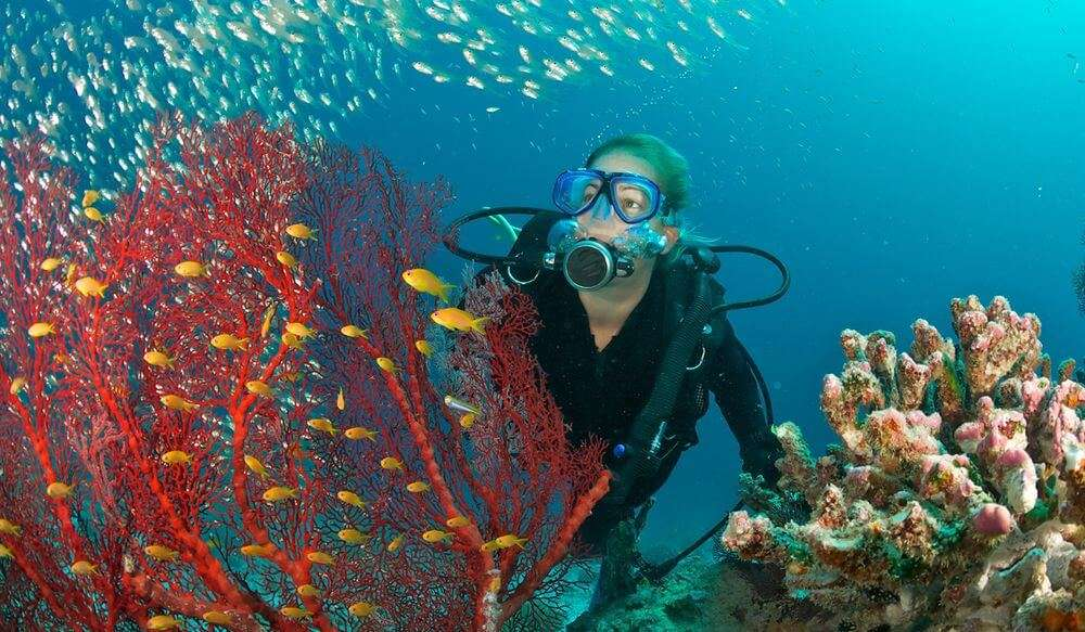 Sucba diving