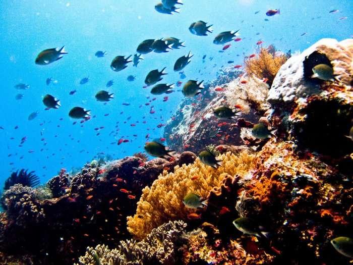 A view of scuba diver