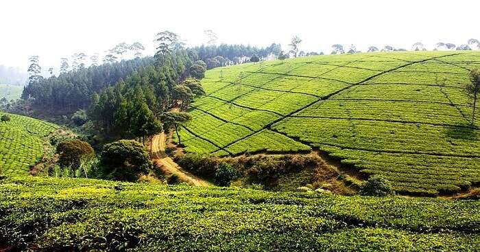 22 Best Places To Visit In Nuwara Eliya In 2020 ...