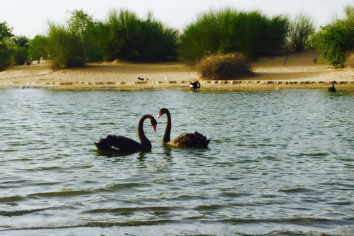 Al Qudra Lakes in Al Marmoom in Dubai