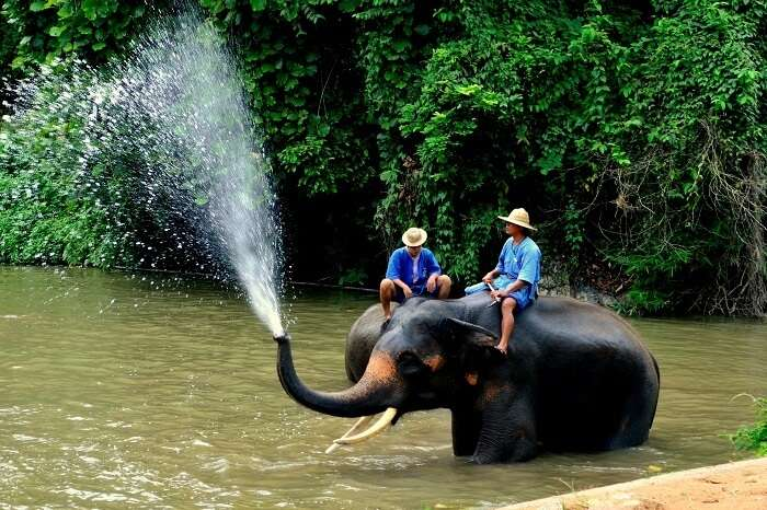 Thailand Elephant Stay